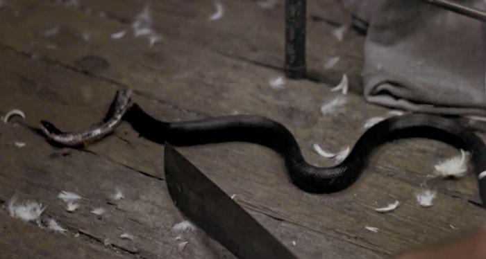 snake-kill